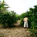 Oscar teaching us about the coffee plants on the property