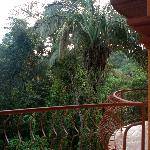 This is the view from our balcony -- the trees through which the monkeys make their daily rounds