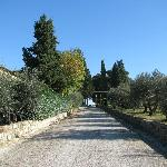 The road to the olive grove