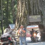 Even tough looking bikers want their picture taken in the tree!