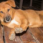 Cinnamon - the resort pup!