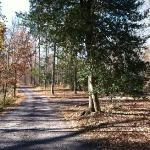 View of the woods and gravel road to cabin