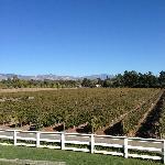 Overlooking a vineyard