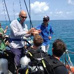 Explaining the dive