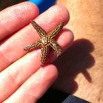 Starfish found near Cayo Costa