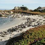 Seals on beach a few steps from Inn
