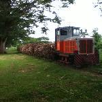 Sugar cane harvest, real life Fiji