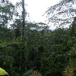 A view of the jungle out of the back lower porch