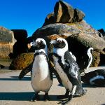 Boulders Beach -with Seamore-Express Tours and Guesthouse