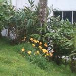 Garden outside