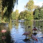 le lac des flamants / pink flamingo lake