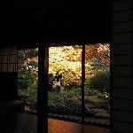 和室からの庭の眺め