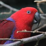 des oiseaux exotiques / exotic birds