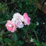庭はきれいに手入れされていろいろな花が咲いてました。