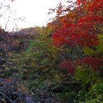 白滝周辺の紅葉