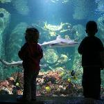 Tropical Ocean Tank, home to 10 species of sharks