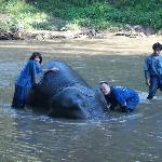 Giving the elephants a bath...they loved it.