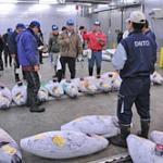 Tuna auction at the Narita Wholesale Market
