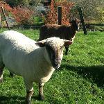 Meet our friendly farm animals