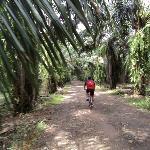 a ride through the plantation