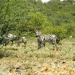 Lake Bogoria National Park