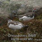 Local bird life