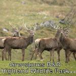 Highland Wild Life Park