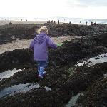 Rockpooling at Croyde Bay