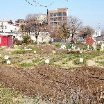 A view of an urban garden next to the hotel.