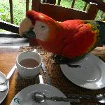 Macaw joining us for lunch