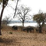 Elephants wandered into the property area