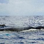 Op walvissafari met gids en boot vanuit de lodge op de Grote Oceaan