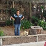 Show mit exotischen Tieren Floridas