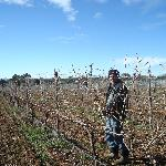 We hand prune our vineyard to ensure top quality