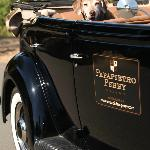 Our winery dog, Ruby, waiting for a ride