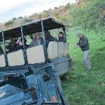 Game drive vehicles temporarily bogged