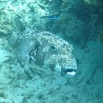 Something large, spotted by our snorkle guide