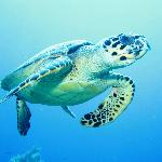 My best shot of (one of many) sea turtle