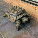 Bernice the wondering Turtle @ tanglewood