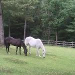 Horses also reside on the property.