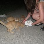 me feeding the kittens :)