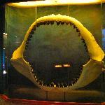 Megaladon jaws