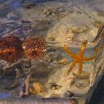 Aquarium animals