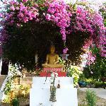 Dans l'arrière cour du S bar un magnifique Boudha Fleurit