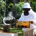 Karo du Chef - our honey