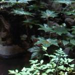 和風内の坪庭。