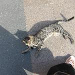 More cats in Sultahnamet