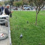 Feeding pigeons in park