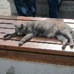 Cat in Sultanahmet Park