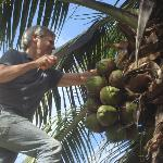 My husband couldn't resist cutting down some ripe coconuts, and I loved to eat them!